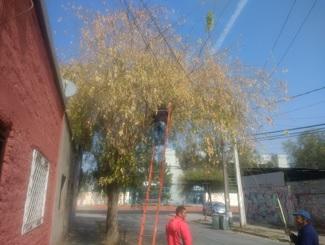 A fin de mes comienza nuevo calendario de rebaje de ramas